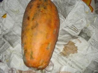 papaya 3