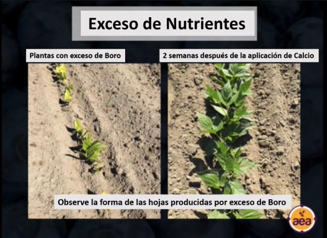exceso de nutrientes