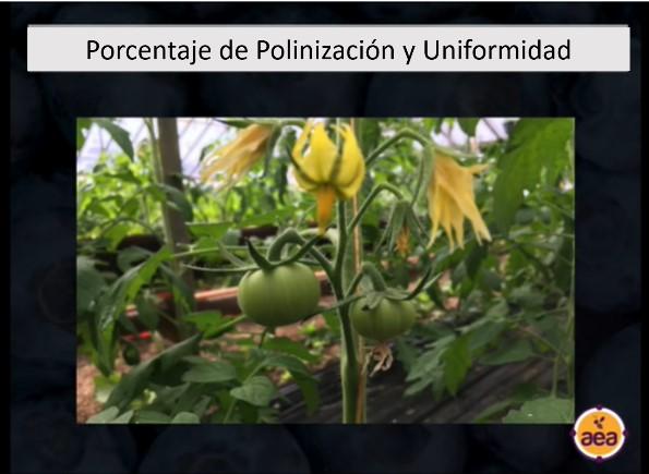 porcentaje de polinizacion y uniformidad